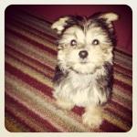 Sonny carpet