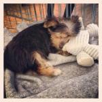 Sonny nap
